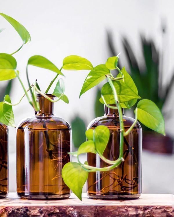 plantas más fáciles de cuidar